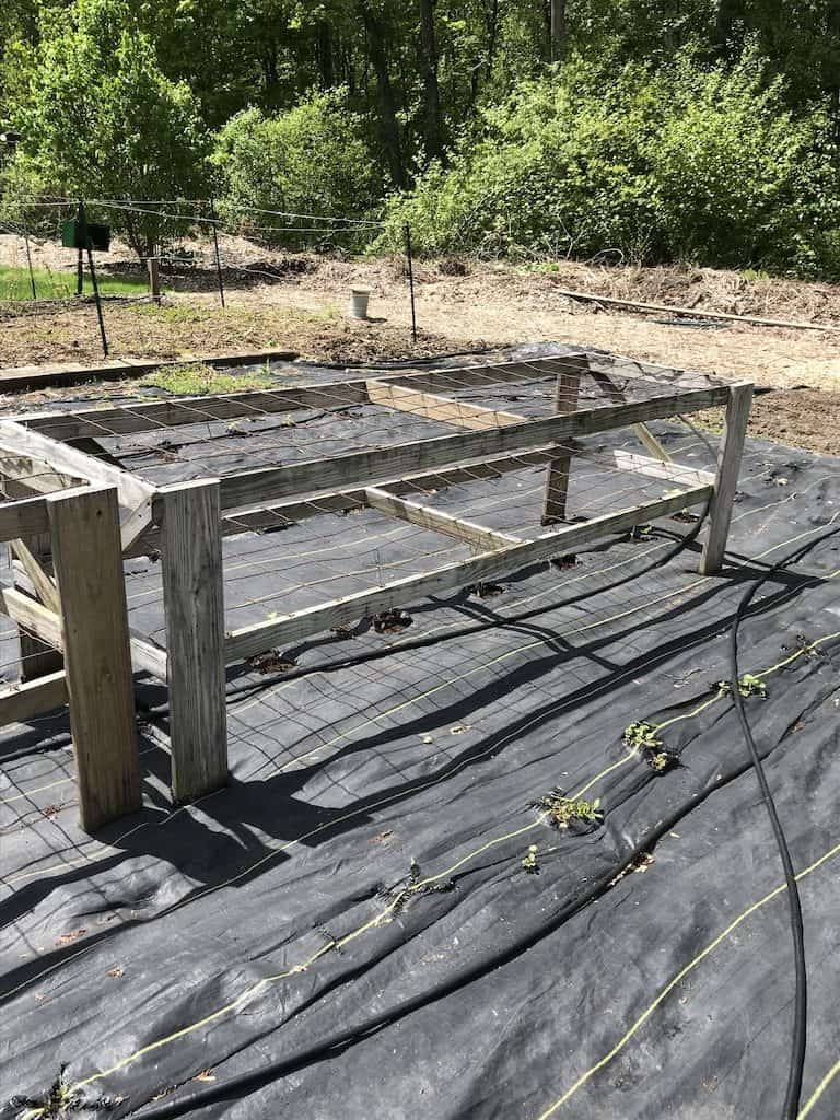 supports for tomato plants