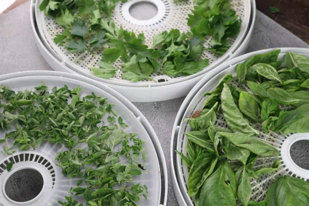 herbs on dehydrator tray