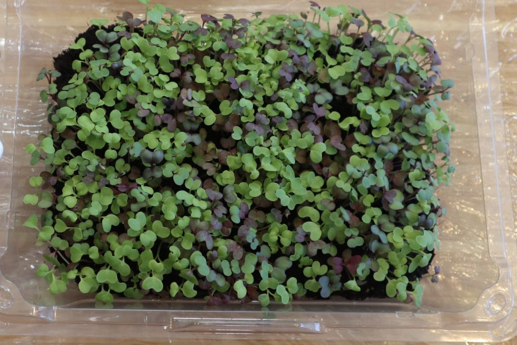 microgreens in strawberry container