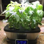 Grow an AeroGarden